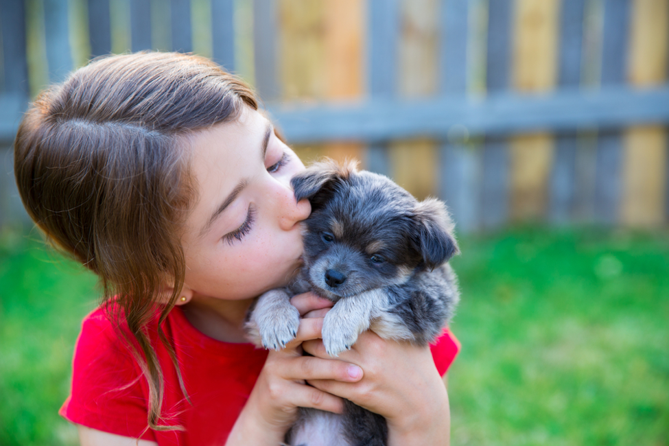 How To Choose The Right Pet For Your Family - Vets on Balwyn